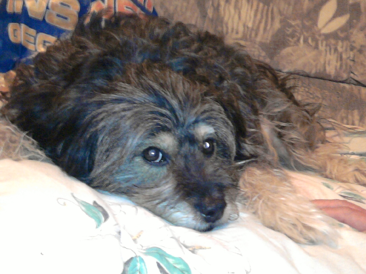Image SEO all 2: Terrier mix, post 15