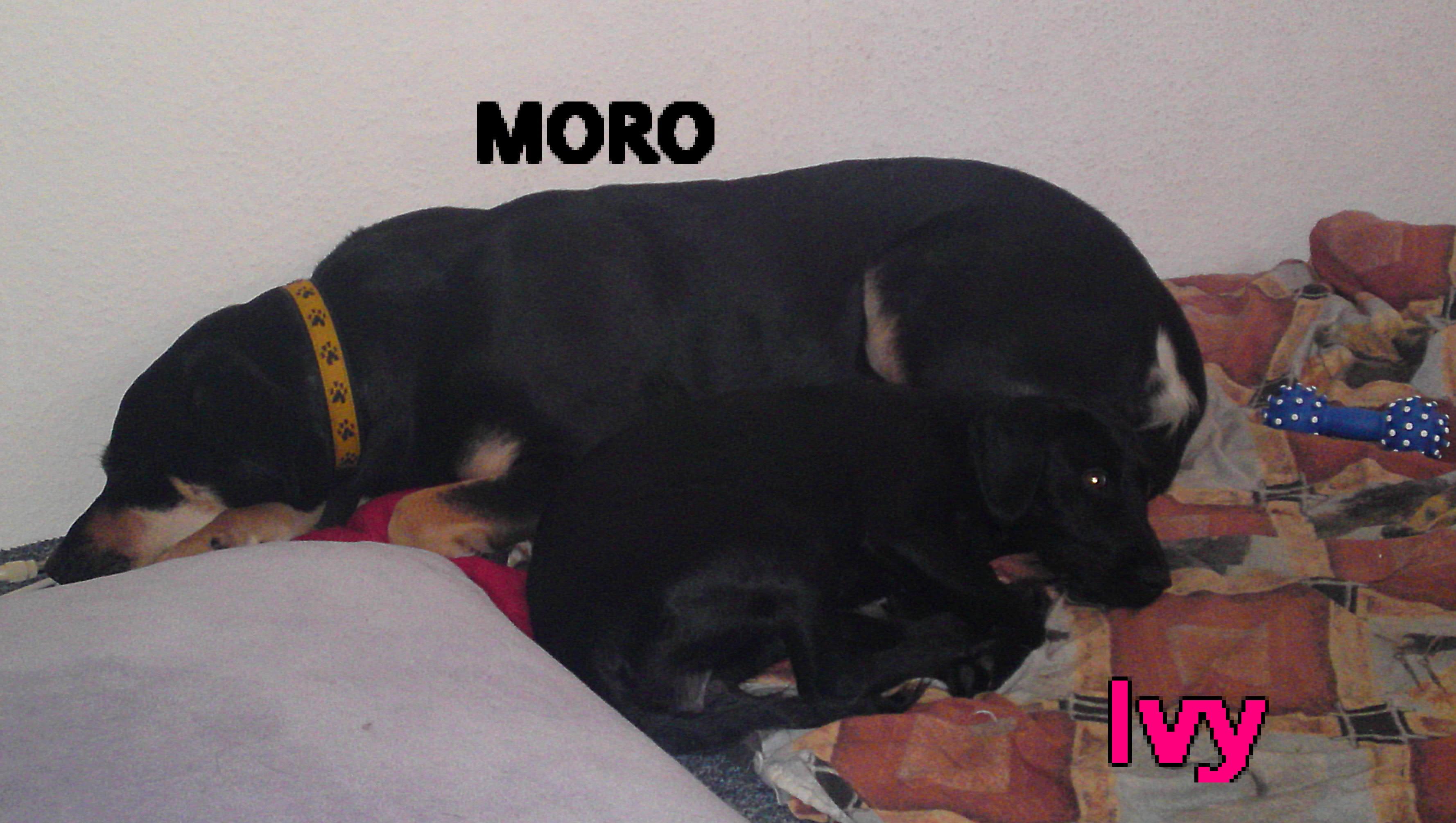 Hund Frisst Tapete An Was Tun : List Of Hunde Und Welpen Kaufen Ebay Ebay Kleinanzeigen Images
