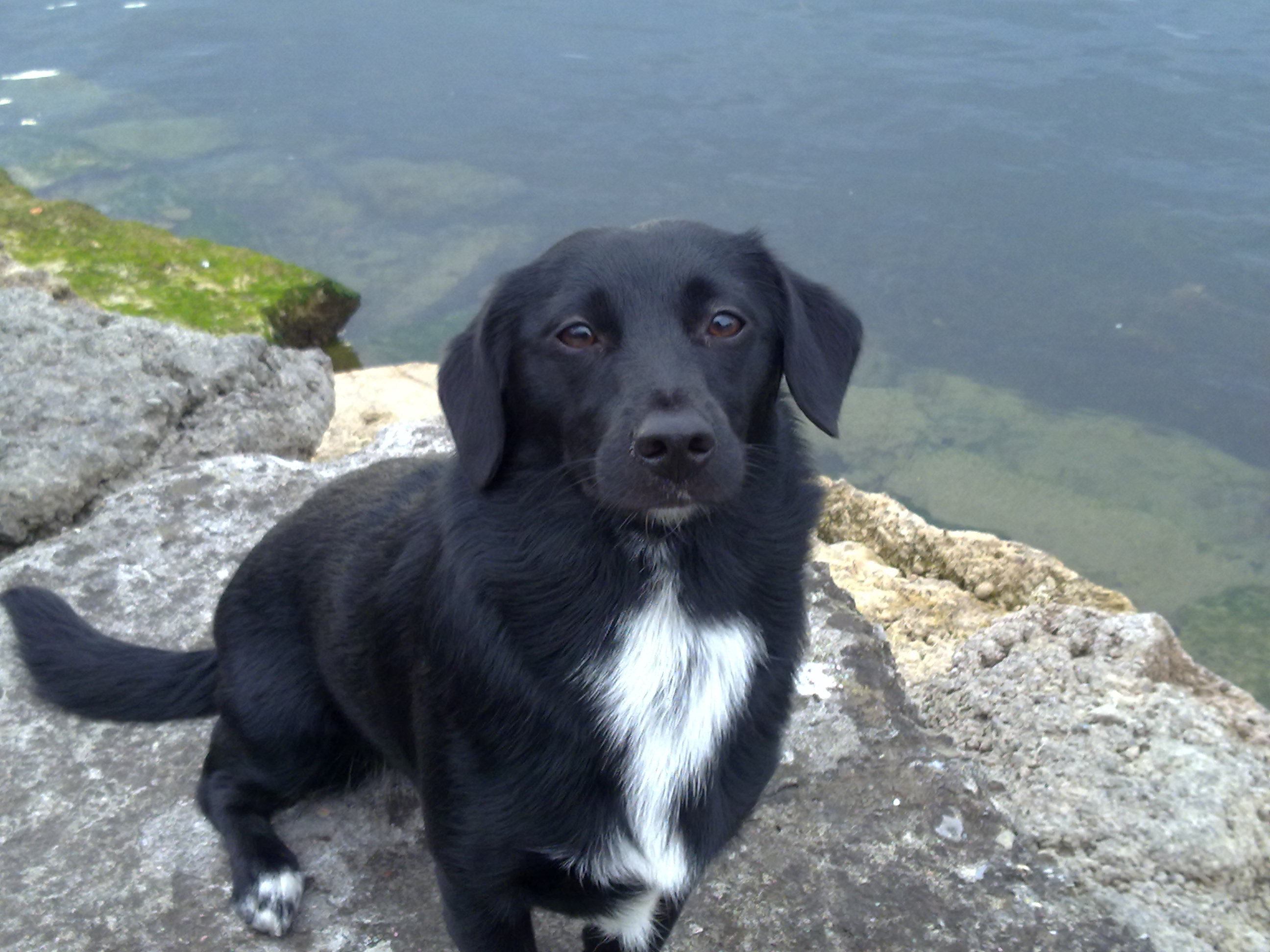 Mina (Dackel, Labrador, Terrier) – MeinMischling de